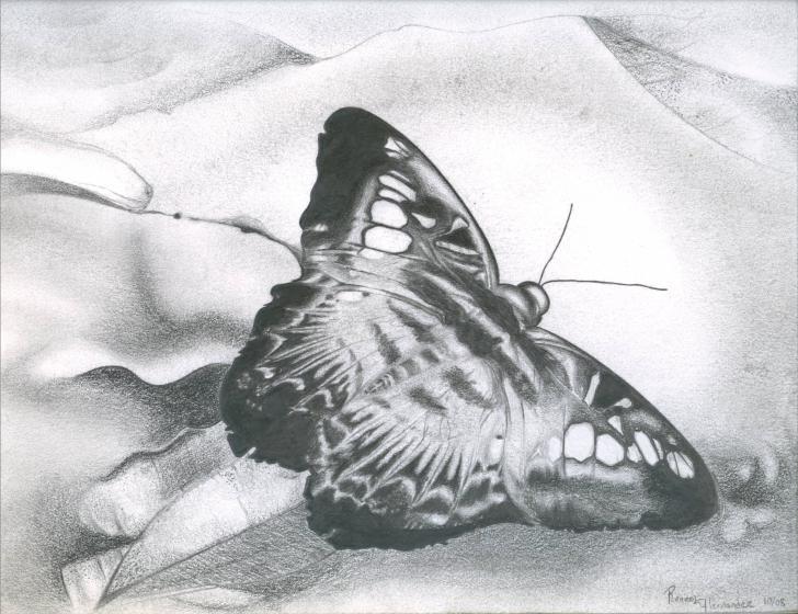 Butterfly by RenzoEHernandez