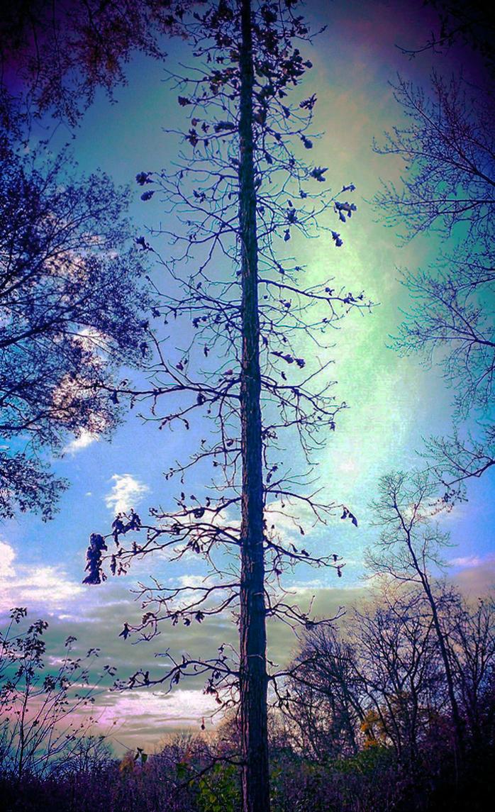 Tree Line by RenzoEHernandez
