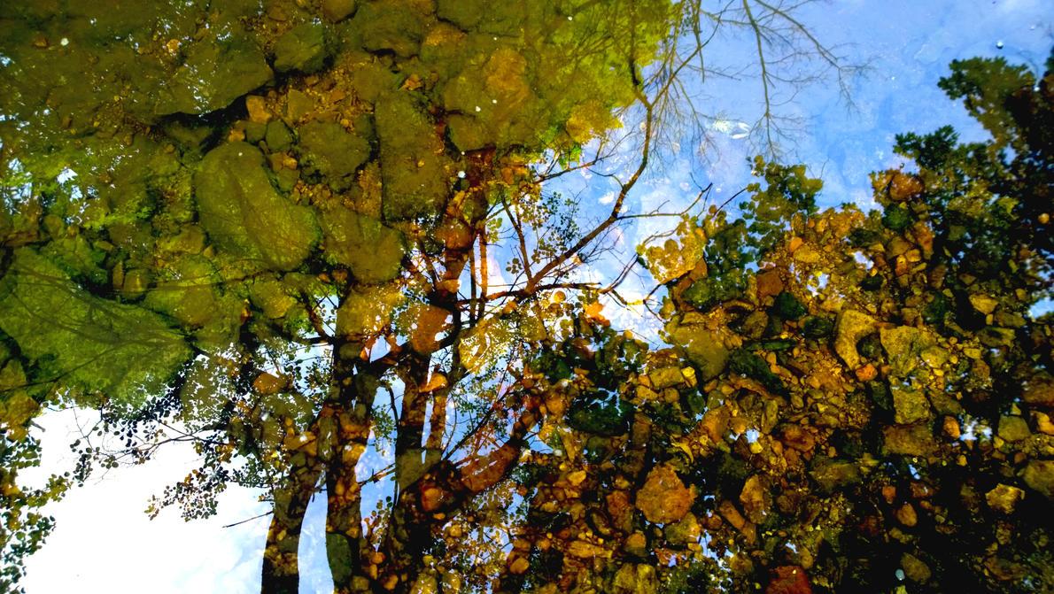 Trees Rock! by RenzoEHernandez