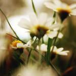 Fall into your sunlight by Borboletra
