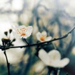Good morning, spring