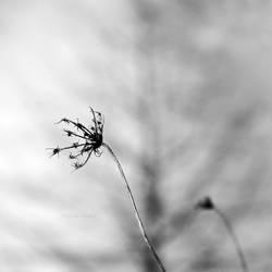 thorax. by Borboletra