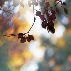 outono by Borboletra