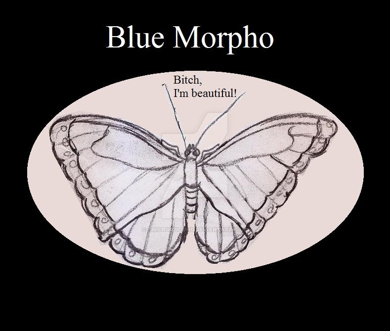 Blue Morpho, Insect Buddies series 2 by UnicronHound