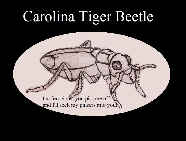 Carolina Tiger Beetle by UnicronHound