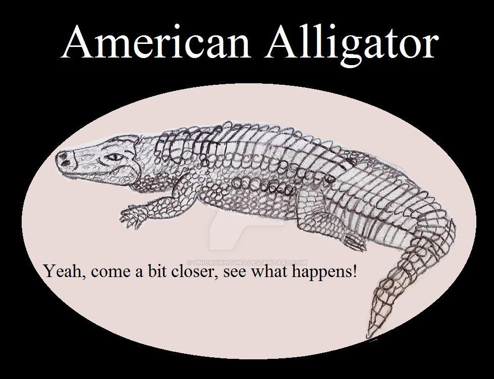 Reptile Buddies American Alligator by UnicronHound