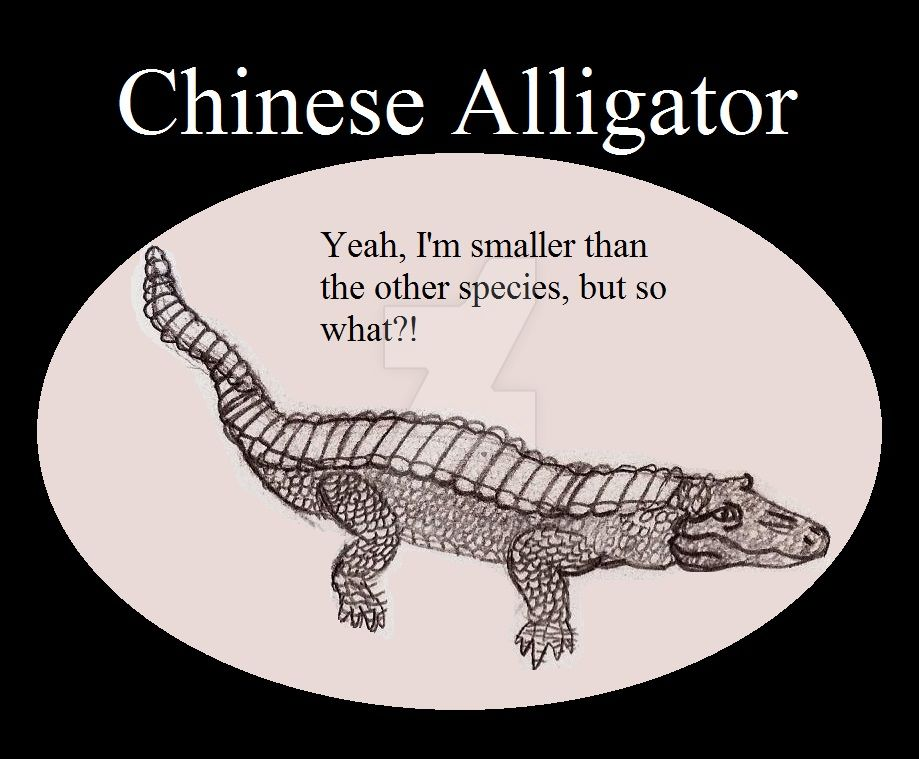 Reptile Buddies Chinese Alligator by UnicronHound