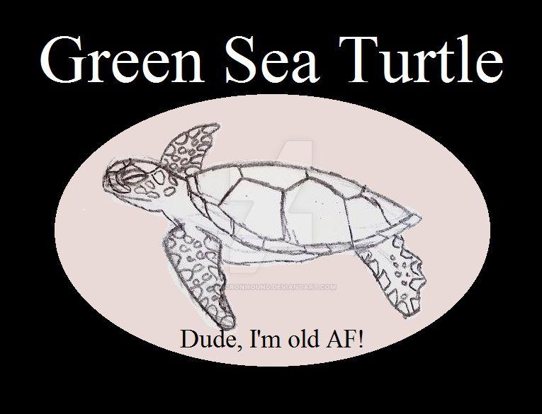 Reptile Buddies Green Sea Turtle by UnicronHound