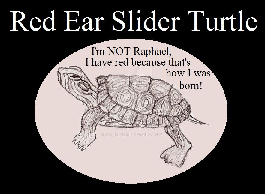 Reptile Buddies Red Ear Slider Turtle by UnicronHound