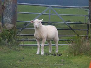 Lamb Gate