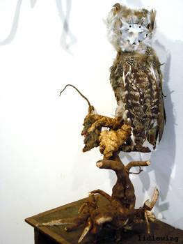 owl specimen 55981f