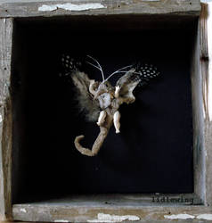 specimen for ryan, 2009 by lidlewing
