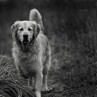 a dog by bagnino