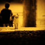 a cat by bagnino