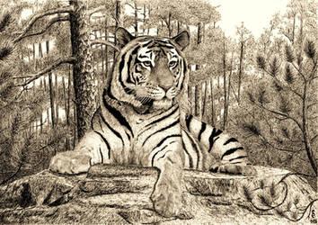 Tiger 29.07.16