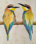 European Bee-eaters by daviddekleer