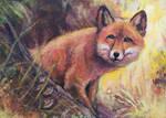 Curious Fox [ACEO]