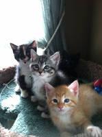 My kittens by WindCatWarrior