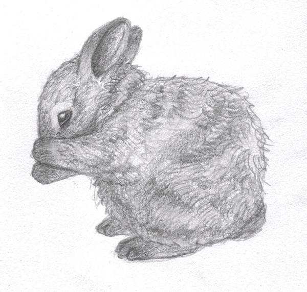 Sketch Of A Baby Bunny By Fwup-Baby On DeviantArt