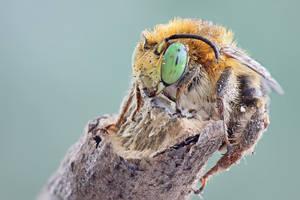 DIRTY BEE by ELKAPL