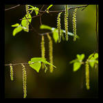Greening by justfrog