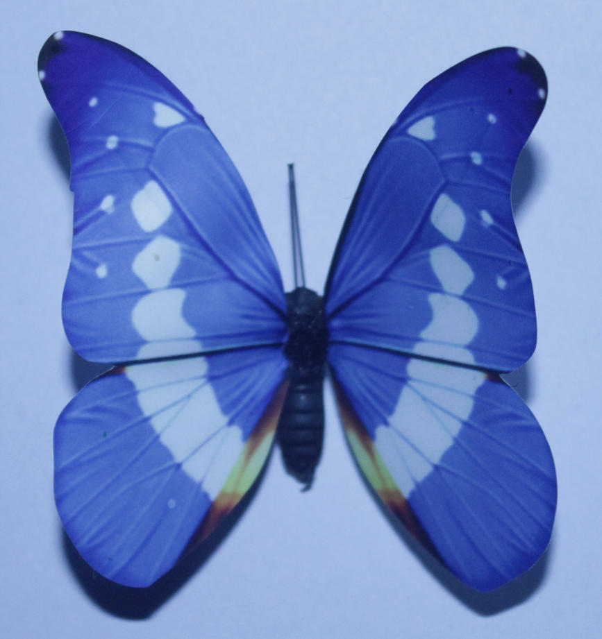 blue butterfly group - photo #17