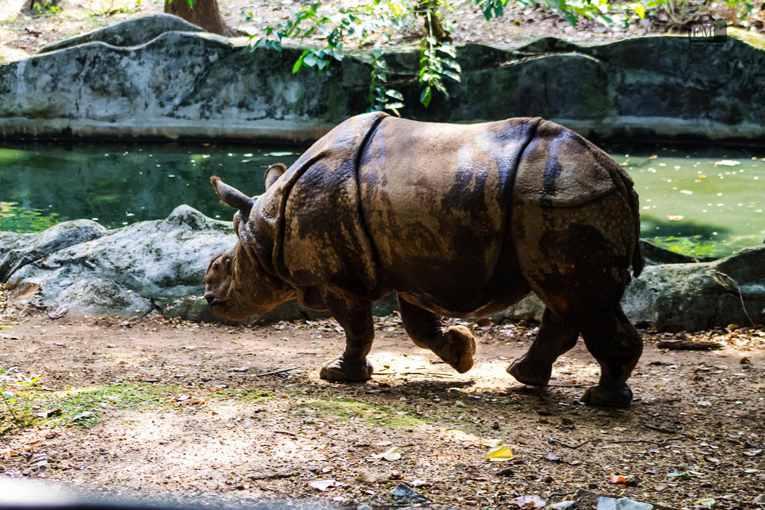 Indian Rhinoceros by KleioAmon