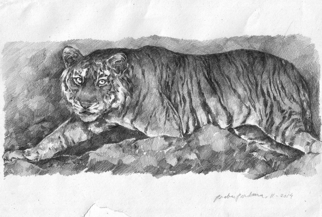 Macan Asia by prab-prab
