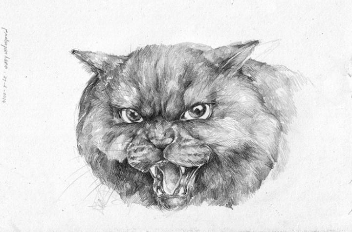 Angy Cat by prab-prab