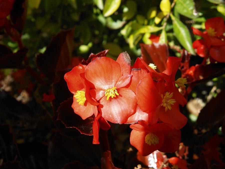 Flora by Dustinpg