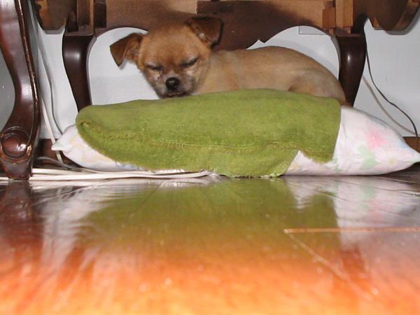 I miss my dog by KasakuraxMaskai