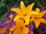 Yellow Lily and pink flowers by KasakuraxMaskai