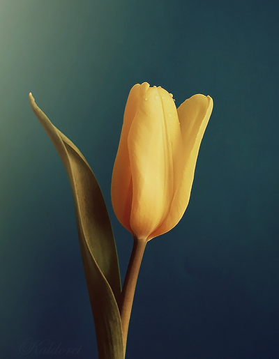 Yellow flower by kaldorei photography on deviantart yellow flower by kaldorei photography mightylinksfo