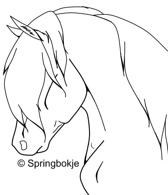 Line Drawing Horse Head : Horse head by springbokje equinelineart on deviantart