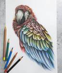 Scarlet Macaw :)
