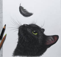 Cat and feather