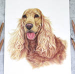 Cockerspaniel :)