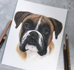 Boxer the dog :)