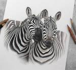 Zebra buddies :)