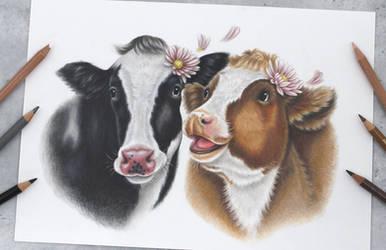 Cow friends :)