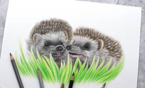 Hedgehog friends:)