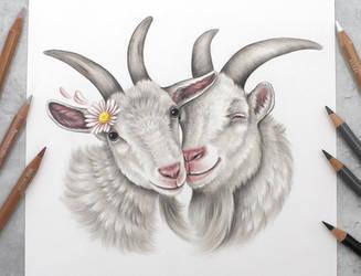 Goat friends :)