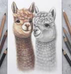 Alpaca friends :)