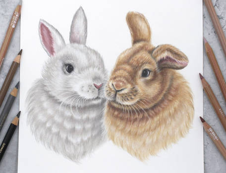 Bunnies :)