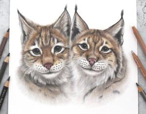 Bobcats :)