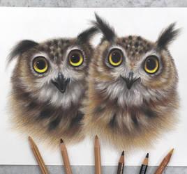 Owl friends :)