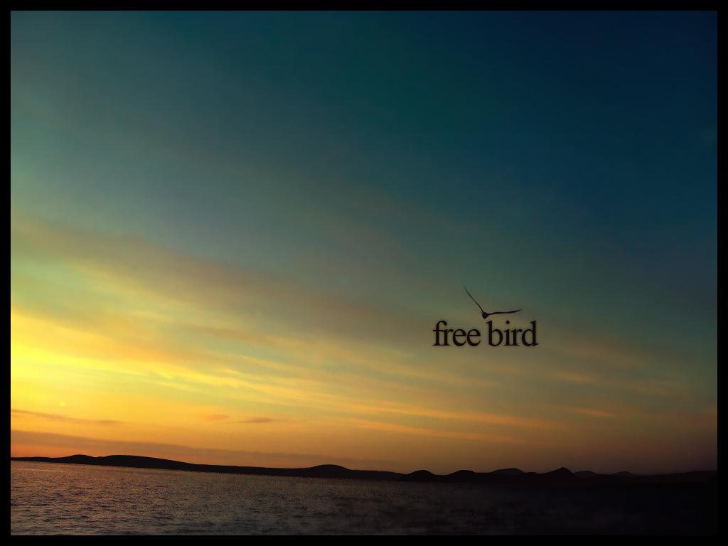 Http Tilabgf Deviantart Com Art Free Bird 88402390