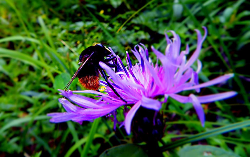 bumblebee by Bputy-crazygirl