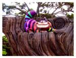 Cheshire Cat's Trip