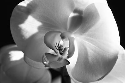 Fleur by MissSad
